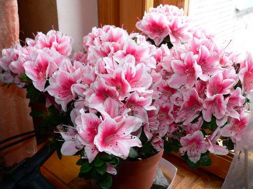 Какие комнатные цветы любят холод фото